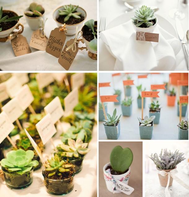 plantas composicion